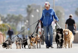 9. Dog Walker